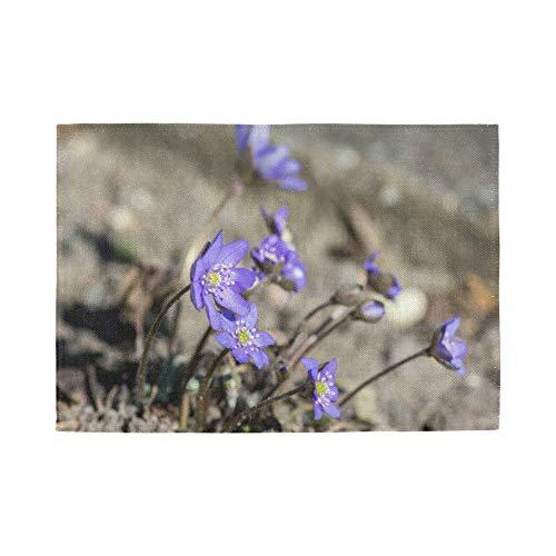 Set de 6 Sets de Table, Sets de Table lavables à Isolation Thermique, Hepatica Nobilis Bloom Group Blue Violet 18 X 12 Pouces Tapis de Table de Cuisine Set de Table pour Table à Manger
