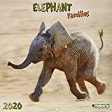 Elephant Families 2020: Kalender 2020 (Wonderful World) -