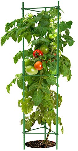 K-Brands Tomato Cage – Plant Stakes and Support with Clips (Upto 72...