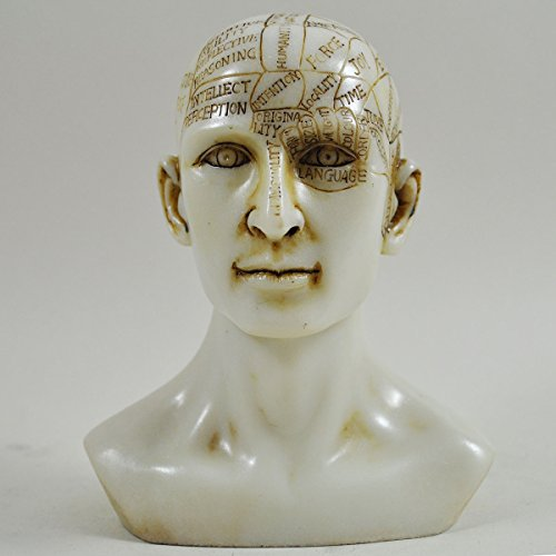 Fiesta Studios Phrenology Head White Marble Resin Unique Home Decorative Traditional Medical Accessory H15cm