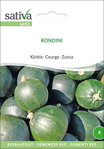 Sativa Rheinau kü53 Kürbis Rondini (Bio-Kürbissamen)