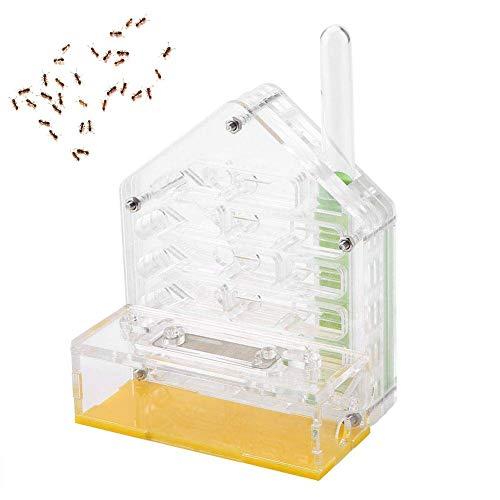 Nido de Hormigas Acrílico Hormiguero Villa Hormiga Granja Hormigas alimentación de Humedad Ant Farm Acryl Insect Villa Villa Mania Avanzada para Hormigas casera