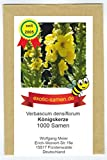 Großblütige Königskerze - Verbascum densiflorum - Arzneipflanze mit großen Blüten - 1000 Samen