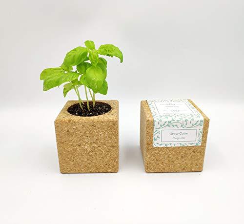Grow Cube aimanté (Menthe)