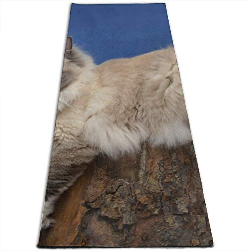 YYRR Yoga Matte Floor Exercise Mats for Home Blue Mitted Ragdoll Cat Personalized Printing ThickNon-Slip Anti-Tear High Density Lightweight with Carrying Strap Storage Pockets Pilates Mat Foldi