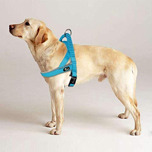 Louvra Hundegeschirr Mesh Brustgeschirr für Hunde Atmungsaktiv Vest Geschirr Reflektierend Einstellbar Weich Geschirr Sicher Kontrolle für Welpen Kleine Mittelgroße Große Hunde - Hellblau L