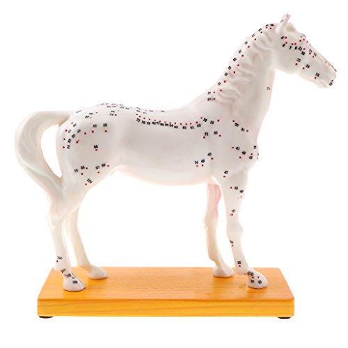perfeclan Anatomie Anatomisches Modell Akupunktur Pferd Lernmodell Lernmittel für Anatomieunterricht