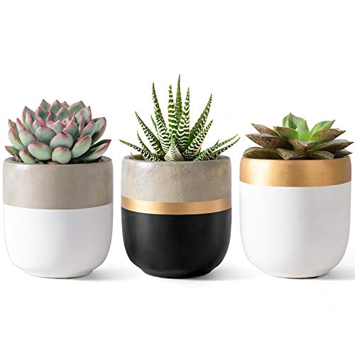 Dahey 3 Pack Small Cement Succulent Planter Pots 4 Inch Modern Mini Concrete Flower Pots Indoor Outdoor for Cactus Herb or Small Plants Home Decor