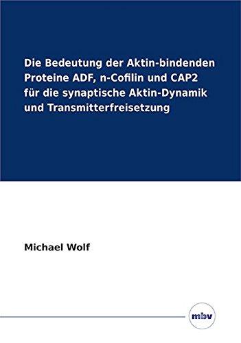 Die Bedeutung der Aktin-bindenden Proteine ADF, n-Cofilin und CAP2 für die synaptische Aktin-Dynamik und Transmitterfreisetzung