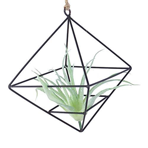 Plantas Aire Forma Geométrica Forma Geométrica Plantas Aire Soporte Geométrico Plantas Aire...