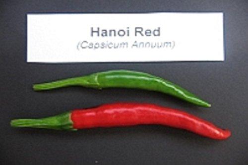 Hanoi Red Pepper - Vietnamese Chili, Pfeffer - (30 Samen) Einfach zu wachsen, zu reifen früh!