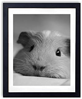 SHADENOV Black Wood Framed Wall Art - Guinea pig Look Nose Lying - Art Print Pictures For Wall Decoration 16x24 Inches (Black and White)