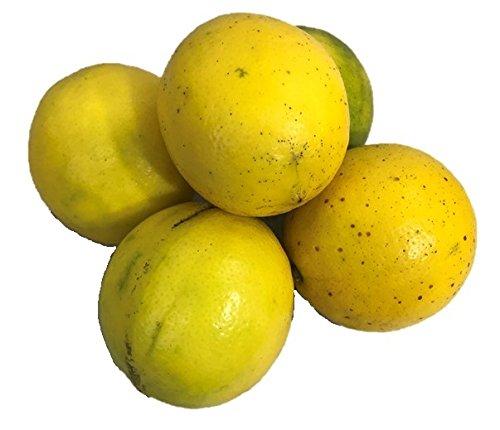 【防腐剤・ワックス不使用】三重県産(国産メイヤーレモン 5kg )青果
