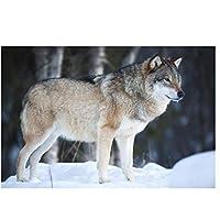 雪の中のオオカミ動物壁アートポスターHdプリントキャンバス絵画家の装飾リビングルーム寝室の装飾アートワークギフト写真-50x75CMフレームなし