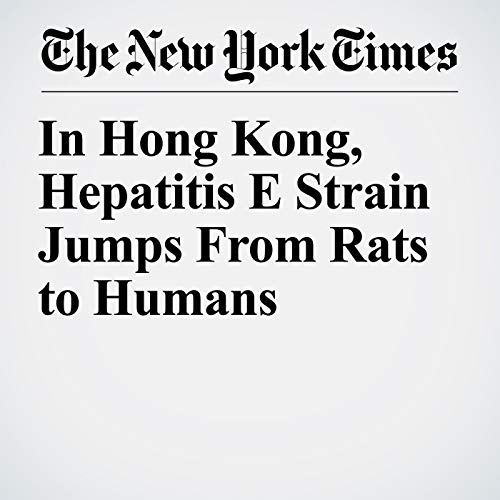 In Hong Kong, Hepatitis E Strain Jumps From Rats to Humans copertina