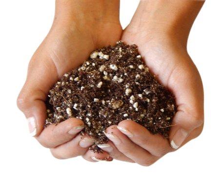 Organic Succulent and Cactus Soil