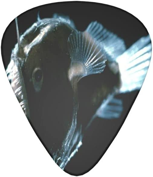 Max 50% OFF Glowing Fish Guitar Picks 12 Fashionable Pack G Electric Bass Acoustic For