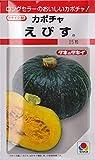 カボチャ タキイ交配 えびす  タキイのカボチャ種です
