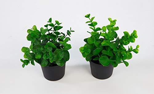 Seidenblumen Roß 2 Stück Mini-Eukalyptus 13cm im Topf GA Kunstpflanzen künstliche Pflanzen Eukalyptus