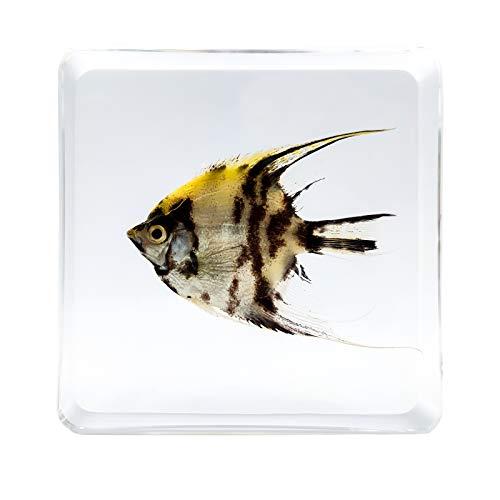 LOOYAR Sea Fish Resin Paperweight Desk Decoration Taxidermy Animals Biology Anatomy Educational...