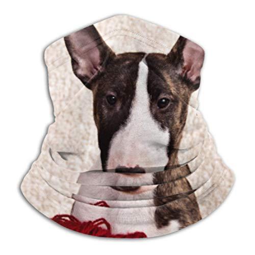 AEMAPE Calentador de Cuello, Polaina de Cuello, Calentador de Orejas, Diadema, Raza de Perro, Mini Bull Terrier, Bufanda de versatilidad sentada