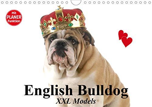 English Bulldog XXL Models (Wandkalender 2021 DIN A4 quer)