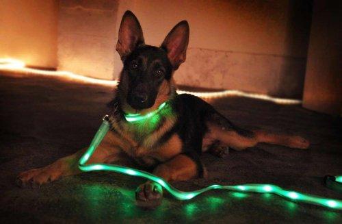 Stylish Dog LED Collar (6 Led lights) and Leash (10 Led lights) Matching Set, BeSafer (Tm) (Green)