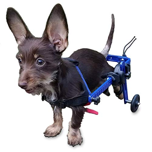 Walkin' Wheels Dog Wheelchair - XS for Mini/Toy Breeds 2-10 Pounds - Veterinarian Approved - Dog Wheelchair for Back Legs