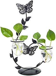 Cool Lemon Iron Butterfly Candle Holder Glass Planter Vase Pot Scindapsus Container for Hydroponic Water Plants Air Plants...