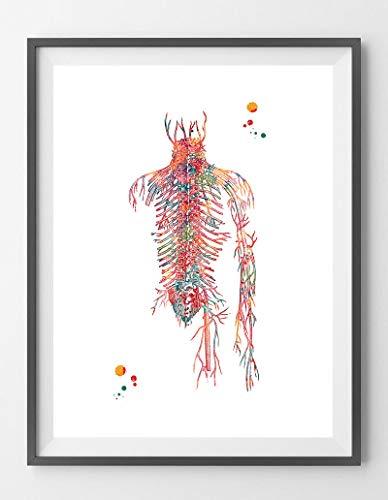 Sistema circulatorio de acuarela, impresión de anatomía de