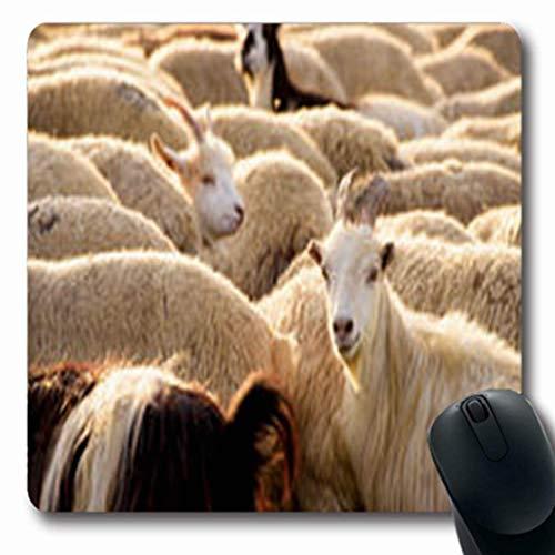 Luancrop Alfombrillas de cría Azerbaiyán Cabras Turista Vida Silvestre Parques Al Aire Libre Agricultura Oblong Gaming Mouse Pad Antideslizante Estera de Goma