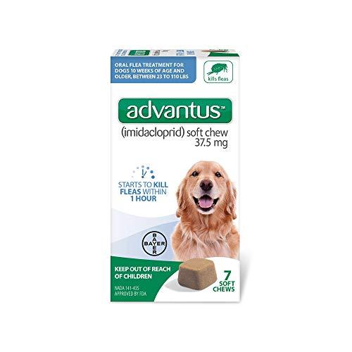 non prescription flea and tick pills for dogs