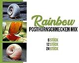 *Garnelen Posthornschnecken Mix - Rainbow - Aquarium Schnecken - Algenvernichter Aquarium Algenbekämpfung, Menge:6 STK.
