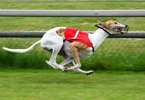 greyhound betting system uk