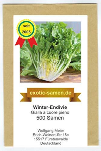 Salat - Winter-Endivie - Gialla a cuore pieno - von exotic-samen - 500 Samen