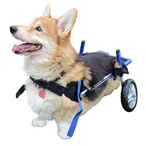 Walkin Wheels For Dogs