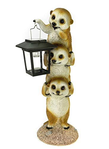 Kremers Schatzkiste Figura de jardín con forma de suricato con farol solar, 38 cm, diseño de suricato