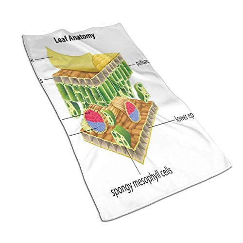 JOJOLASQ Kitchen Dish Towels Wash Cloth Car Household Pet Bath Towel,Anatomy of A Leaf Names of The Microscopic Parts Spongy Stoma Epidermis Layers,27.5 Inch X15.7 Inch