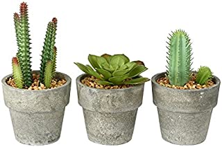 BUZZ - Juego de 3 plantas en miniatura para suculentas/cactus artificial en maceta gris con detalle de guijarros
