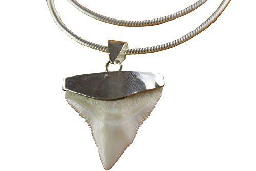 myringshop Haizahn Haifischzahn Silberkette 2 mm breit mit Anhänger Shark Silberanhänger (55)