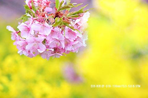 Canon(キヤノン)『EOS80D(W)・ダブルズームキット』