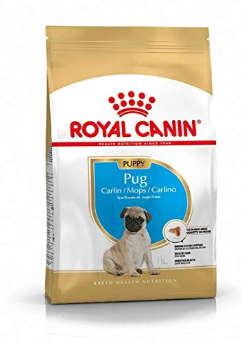 Royal canin carlino junior pienso para carlino joven