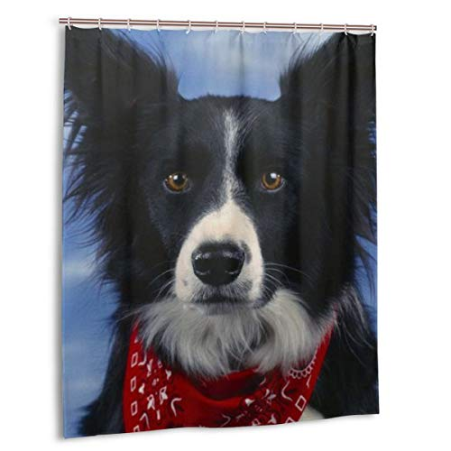 Shower Curtain 60 X 72 Inch Best Collie Dog Bathroom Fabric Shower Curtains Set with Hooks, Water Repellent, Machine Washable