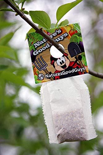 Nature's Good Guys 10 X 1,000 Live Neoseiulus Amblyseius Cucumeris - Guaranteed Live Delivery!