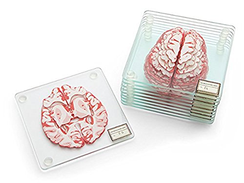 Anatomic Brain Specimen Coasters (Set of 10 Pieces) - Heart Coaster Set Also Available
