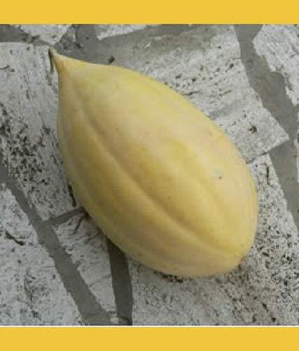 50 BANANA CANTALOUPE Melon Fruit Cucumis Melo Seeds