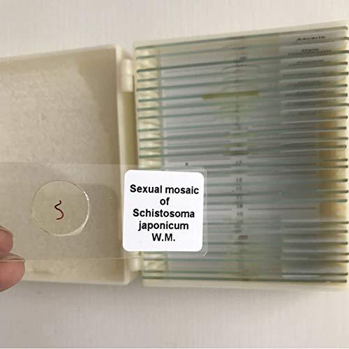25pcs/Set Students Study Medical parasitology Slides Parasite Prepared Microscope Slides