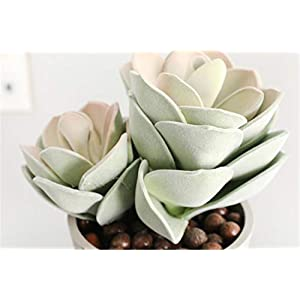 Skyseen 2 Sizes Artificial Lotus Flower Tillandsia Plant Bromeliads Fake Succulent Plants for Home Decor,Green and Pink