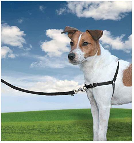 PetSafe - Harnais pour Petit / Moyen Chien Easy Walk (S/M) - Harnais Ajustable et Anti-Traction - 4 Points de Réglage pour Un Confort Maximal - Noir
