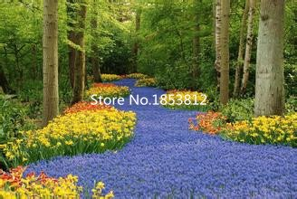 Black : Sale!500Piece 16 Colors Tulip Seeds 2016 New Garden Flowers Four Season Sowing World Rare Flower Seeds For Garden